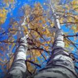 白桦 Birch